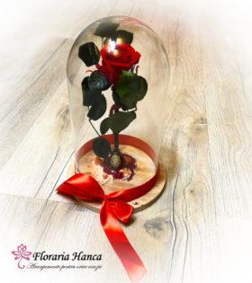 Trandafir criogenat rosu in cupola de sticla livrat la domiciliu de Floraria Hanca