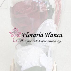Trandafiri criogenati si aranjamente florale cu trandafiri criogenati. Floraria Hanca va ofera decoratiuni si buchete frumoase de trandafiri naturali criogenati.