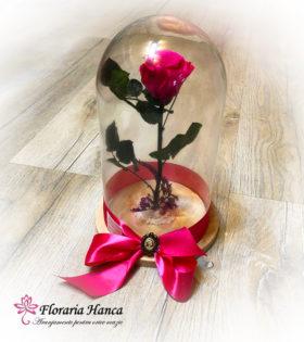 Trandafir criogenat cyclamen in cupola de sticla, model unicat si nemuritor. Trandafir criogenat cu o durata de viata de 25 ani pastrat in conditii optime