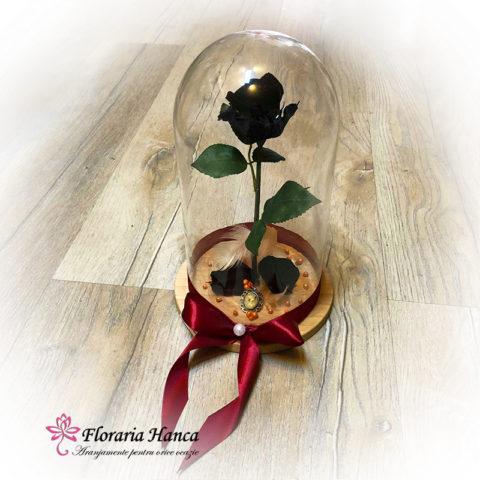 trandafir-criogenat-negru-in-cupola-de-sticla