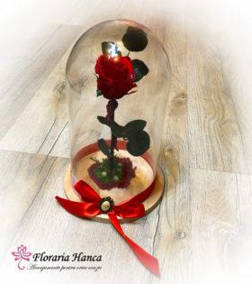 Trandafir criogenat rosu cu licheni oferit de Floraria Hanca - Florarie Cluj, Floresti