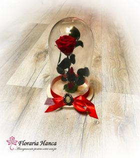 Trandafir criogenat rosu – pastrat in cupola de sticla.