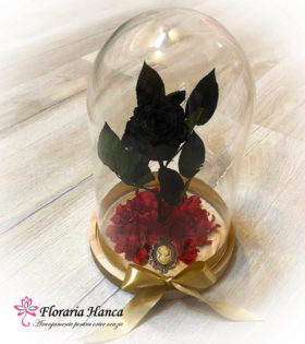 Trandafir criogenat negru in cupola de sticla, model unicat si nemuritor. Trandafir criogenat cu o durata de viata de 25 ani pastrat in conditii optime