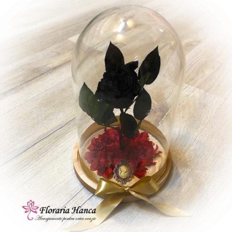 trandafir-criogenat-negru