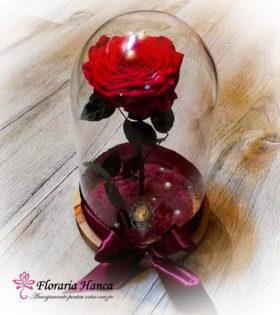 Trandafir criogenat rosu unicat in cupola de sticla, model unicat si nemuritor. Trandafir criogenat cu o durata de viata de 25 ani pastrat in conditii optime