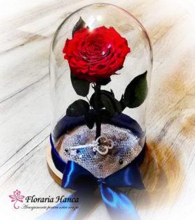 Trandafir criogenat unicat in cupola de sticla, model unicat si nemuritor. Trandafir criogenat cu o durata de viata de 25 ani pastrat in conditii optime